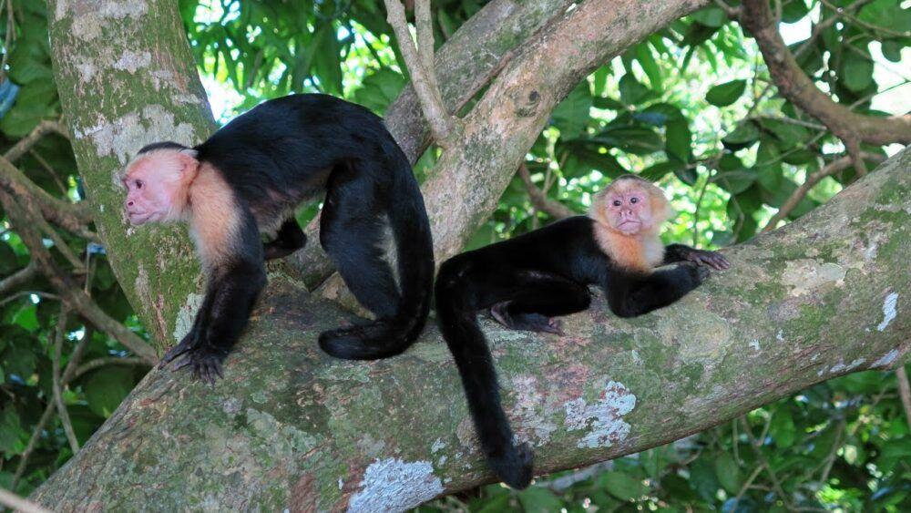 Animales peligrosos en Costa Rica