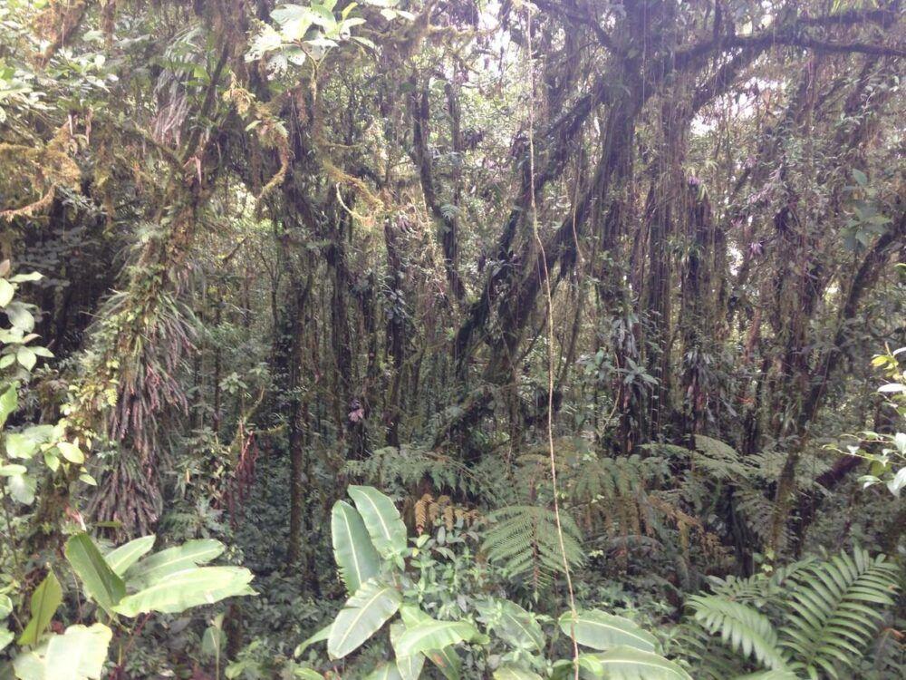 Información adicional de la Reserva de Santa Elena, Costa Rica