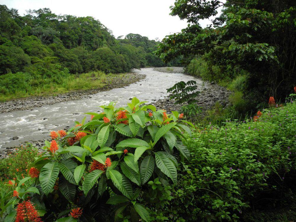 Rio Saraquipi