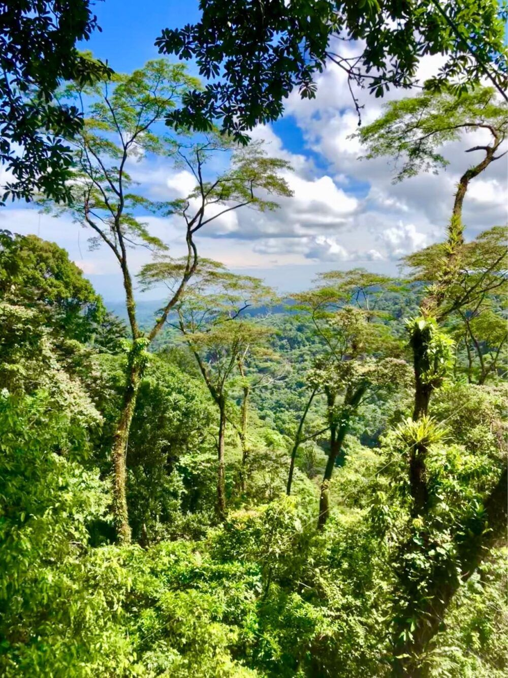 Veragua Rainforest, Costa Rica