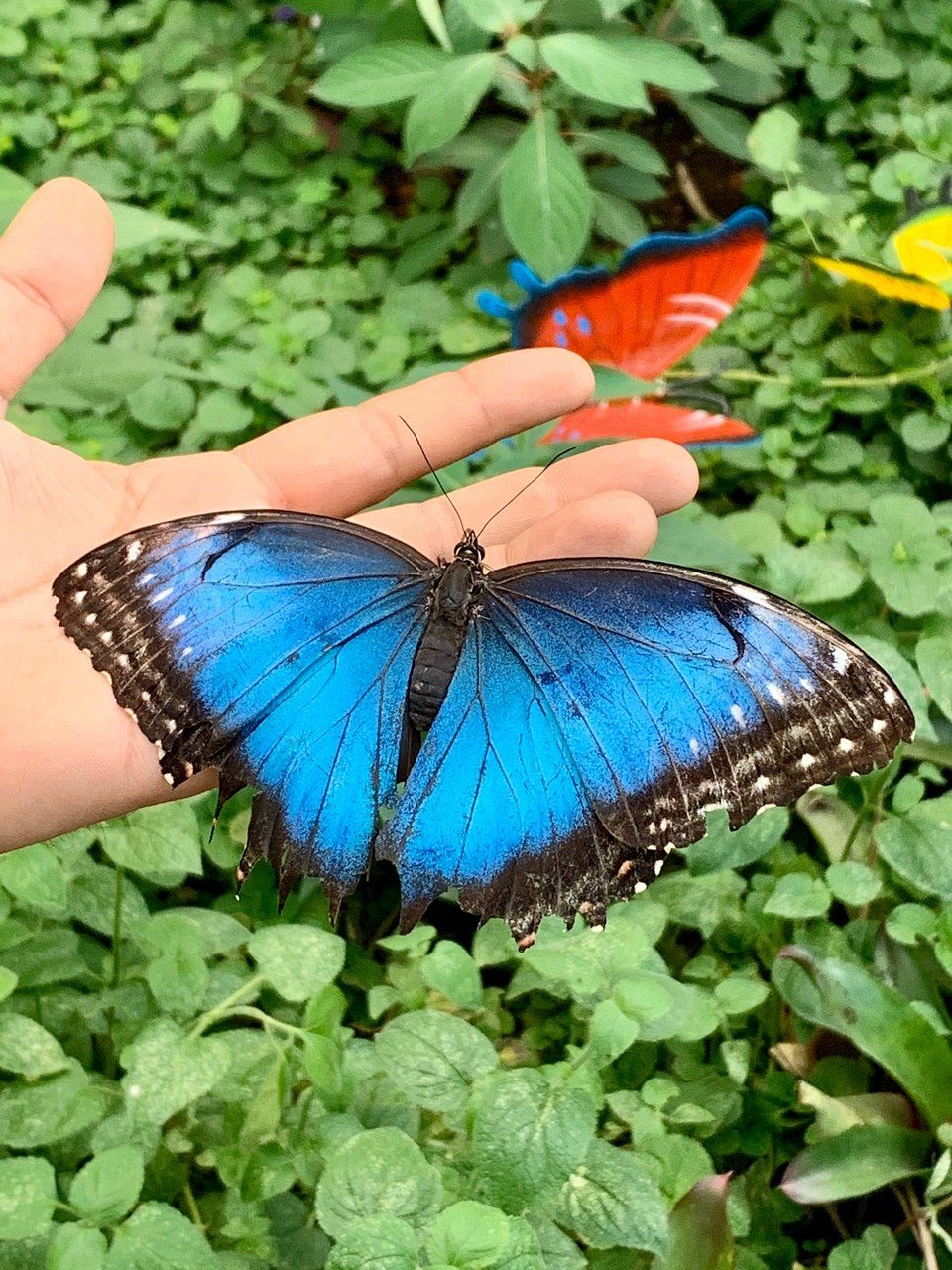 Mariposario Butterfly Kingdom