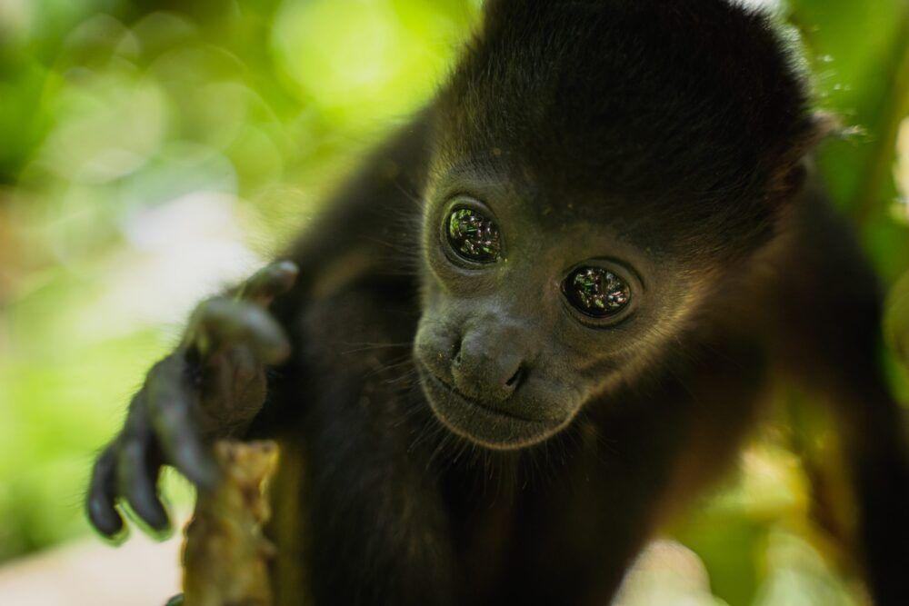 SIBU Wildlife Santuary