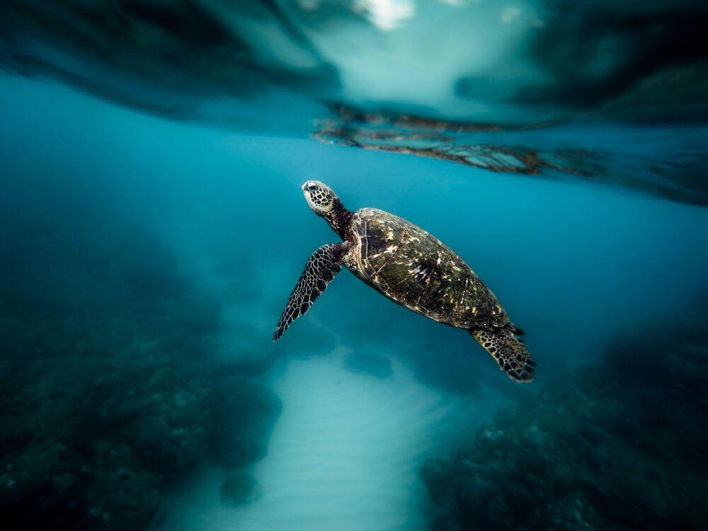 Sea TurtleConservancy